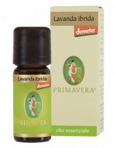 LAVANDA IBRIDA...